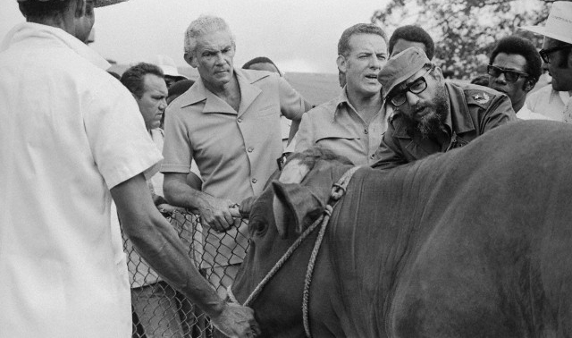 Fidel Castro Inspecting Cattle with Jamaican Officials