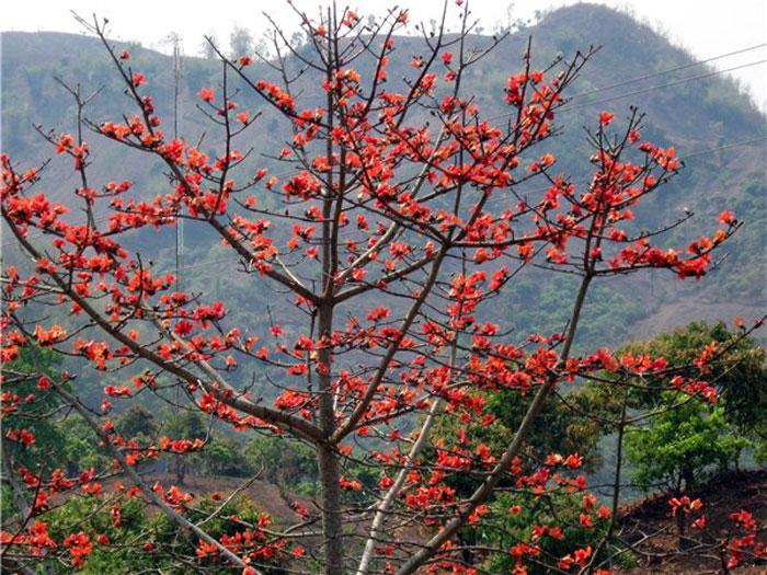 Cam Tran – Thử tìm hiểu nguồn gốc, giải mã các tên địa danh tỉnh Bình Long trước năm 1975