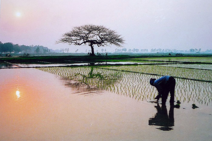 Hai Hùng SG – Thương nhớ đồng quê