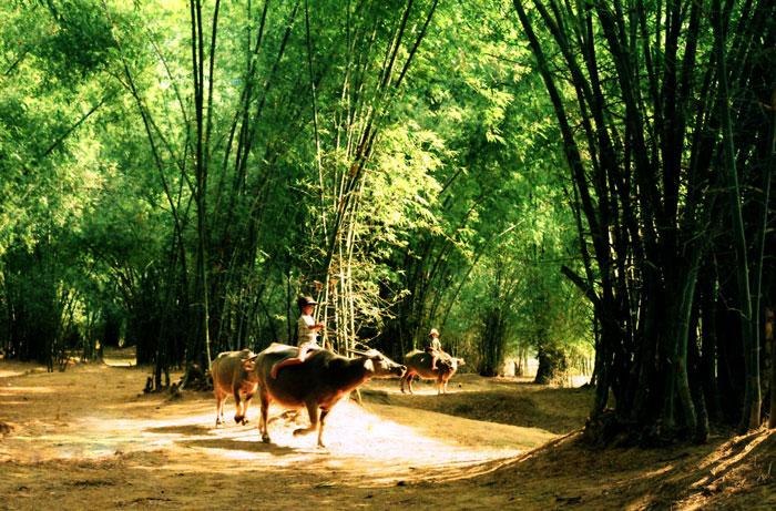Hai Hùng SG – Sau lũy tre làng