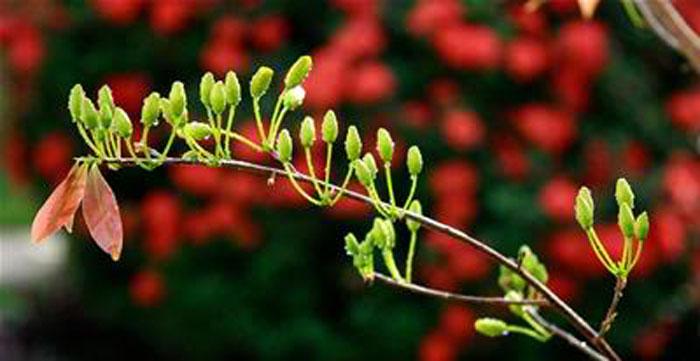 Hai Hùng SG – Mùa xuân trong dĩ vãng